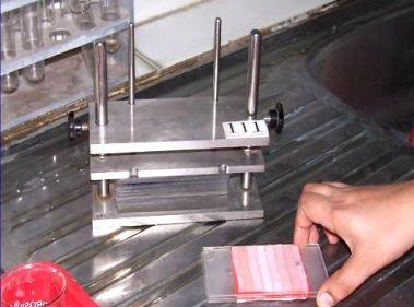 Chuẩn bị 3-4 mẫu thử khác nhau để bỏ vào máy ép cùng một lúc