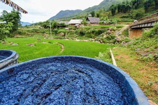 Quần jeans có màu xanh là do được nhuộm bằng thuốc nhuộm chiết xuất từ cây chàm